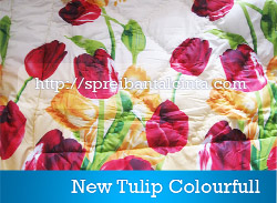 new-tulip-colorfull